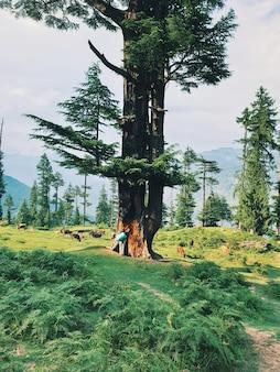 숲의 키가 큰 나무 근처에 서서 아름다운 경치를 즐기는 여행자의 세로 샷