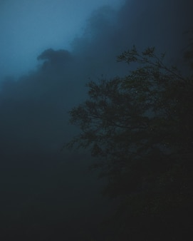 어두운 구름과 나무의 세로 샷