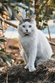 햇빛 아래 바닥에 흰 고양이의 세로 샷