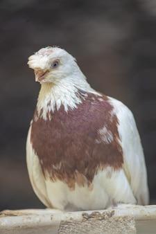 나뭇가지에 앉은 흰 비둘기의 세로 샷