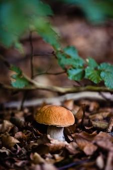 흐릿한 표면으로 햇빛 아래 숲에서 자라는 야생 곰팡이의 수직 샷