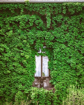 녹색 식물에 둘러싸인 나무 창의 세로 샷