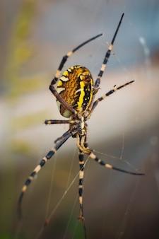 흐린 배경으로 웹에 노란색 정원 거미의 세로 샷