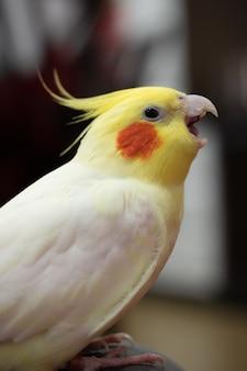 사랑스러운 앵무새의 세로 샷
