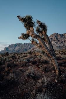 Вертикальный снимок экзотического дерева, растущего на холмах