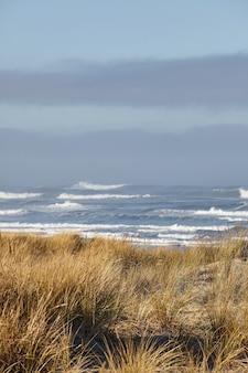 Вертикальный снимок пляжной травы утром в кэннон-бич, штат орегон