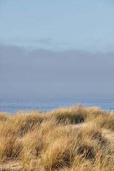 キャノンビーチ、オレゴン州の朝のビーチグラスの垂直ショット