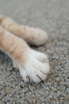 귀여운 새끼 고양이 발의 세로 샷