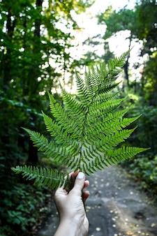 Вертикальный снимок женской руки, держащей папоротник в лесу. коттедж. naturecore. наслаждайся мелочами.