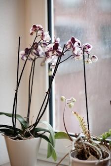 昼間の窓の横にある花の垂直ショット