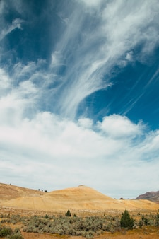 曇った空の下の畑に生えている草や苔の縦のショット