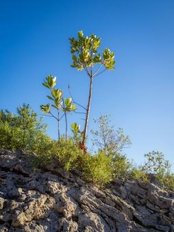 화창한 날에 바위 언덕에 녹색 식물과 나무의 세로 샷