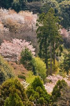 森の中の緑の木々の垂直ショット