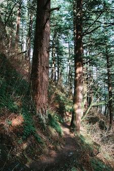 낮에 햇빛 아래 숲에 녹지의 세로 샷