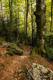 昼間の森で成長する木の垂直ショット