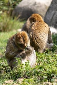 바닥에 앉아 먹는 원숭이의 수직 샷