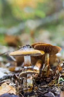 Вертикальный снимок грибов, растущих в лесу
