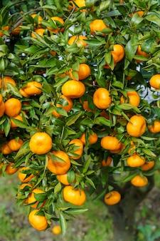 ツリー内のオレンジ色の果物の垂直ショット
