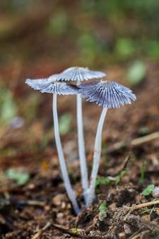 자연 속에서 성장하는 parasola plicatilis의 세로 샷