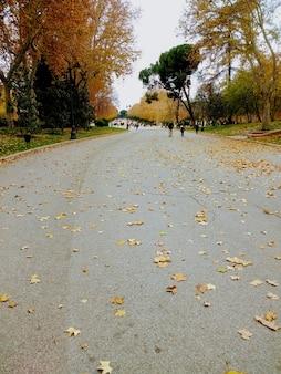 가을 공원에서 나무 옆에 걷는 사람들의 세로 샷