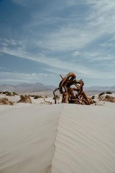 砂地に流木の破片の垂直ショット