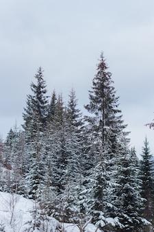 冬の日に雪に覆われた松の木の垂直ショット