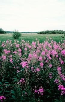 낮 동안 들판에서 자라는 분홍색 꽃의 세로 샷