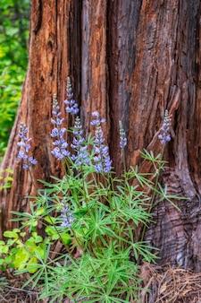 茶色の太い木の周りの紫色の背の高い花の垂直ショット