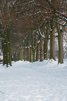 네덜란드 브라반트의 벌거벗은 나무 줄과 눈 덮인 공원 풍경의 수직 샷