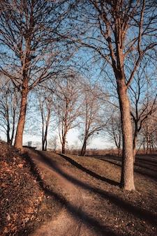 公園で隣同士にいくつかの乾燥した木の垂直ショット
