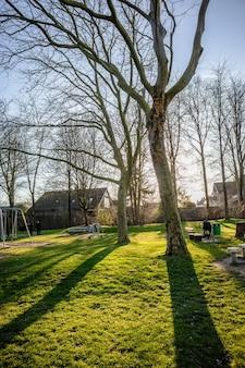 緑の風景にいくつかの木の垂直方向のショット