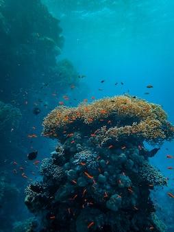 Вертикальный снимок маленьких разноцветных рыбок, плавающих вокруг красивых кораллов под морем