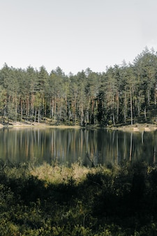 Вертикальный снимок отражения высоких деревьев на озере в парке