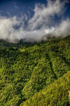 美しい草の垂直ショットは曇り空の下で覆われた山々
