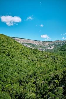 Arche deponadieu野生動物公園の美しい緑の自然の垂直ショット
