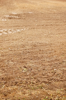 토양에서 자라는 마른 잔디의 세로 샷