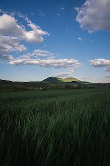 曇り空の下の田園地帯の野原の緑の草の垂直ショット