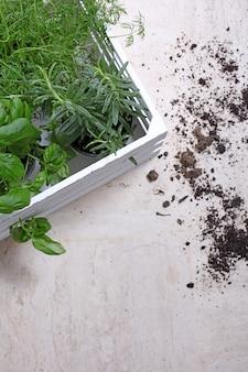 토양 옆에있는 녹색 식물의 세로 샷