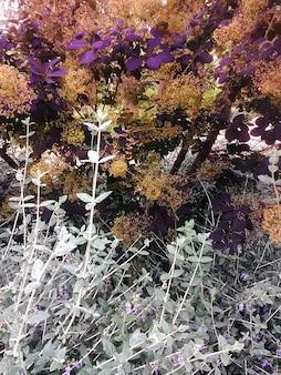 隣り合った異なる植物の葉の垂直ショット