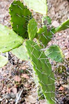 緑のサボテンの針の垂直ショット