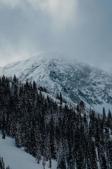 어두운 하늘 아래 눈으로 덮여 산에있는 가문비 나무의 세로 샷