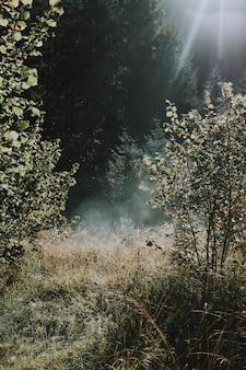 静かな晴れた日に乾燥した森に昇る太陽の垂直ショット
