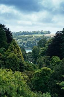 두꺼운 숲과 강의 세로 샷