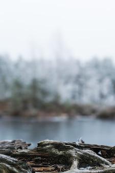 湖の近くの木の根の垂直方向のショット
