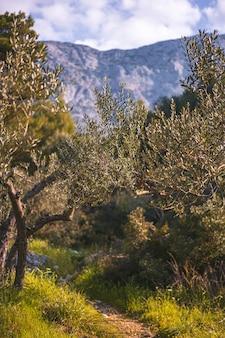 흐린 날 산악 지역에 있는 나무의 수직 샷