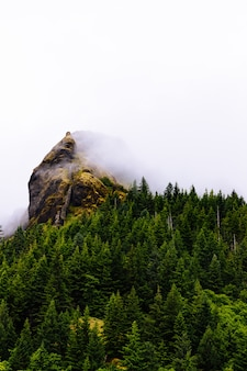 白い背景と霧の中で山の近くの木の垂直方向のショット
