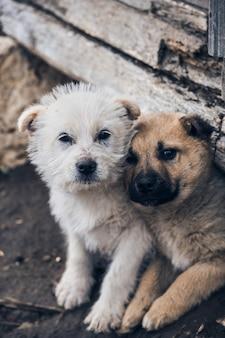 隣同士に座っている2匹の犬の垂直ショット