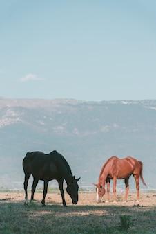 高山の牧草地に放牧2頭の馬の垂直ショット