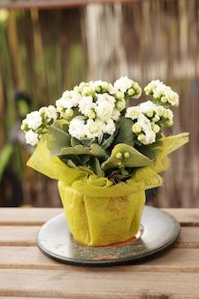 Вертикальный снимок белых цветов в горшке на столе