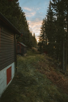 Вертикальный снимок деревянных коттеджей на холме в окружении деревьев, сделанный в норвегии
